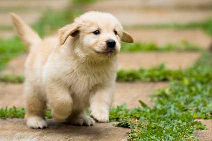 Intelligence et sensibilité des chiens