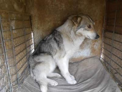 Alerte aux chiens errant en provenance de Roumanie en route vers la Belgique