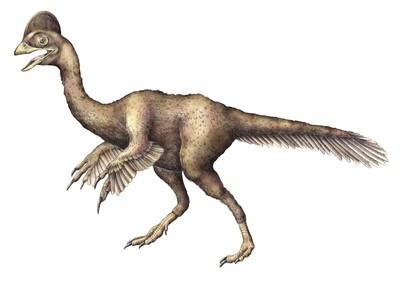 Aux allures de poulet géant, des paléontologues reconstituent une espèce de Dinosaure à plumes