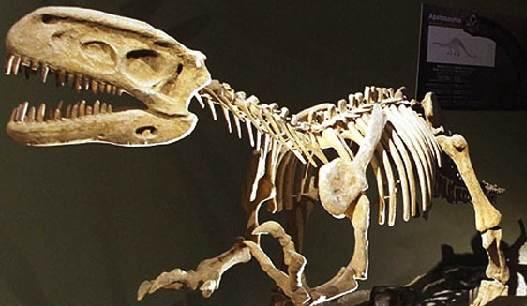 Fossiles de Dinosaures aux enchères