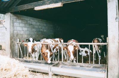 En Wallonie picarde province du Hainaut un projet mené pour prévenir les maladies inconnues chez les bovins