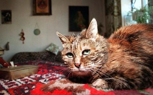 Quel âge avait le plus vieux chat du monde ?