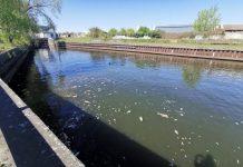 """""""Catastrophe environnementale"""" : Des milliers de poissons retrouvés morts"""